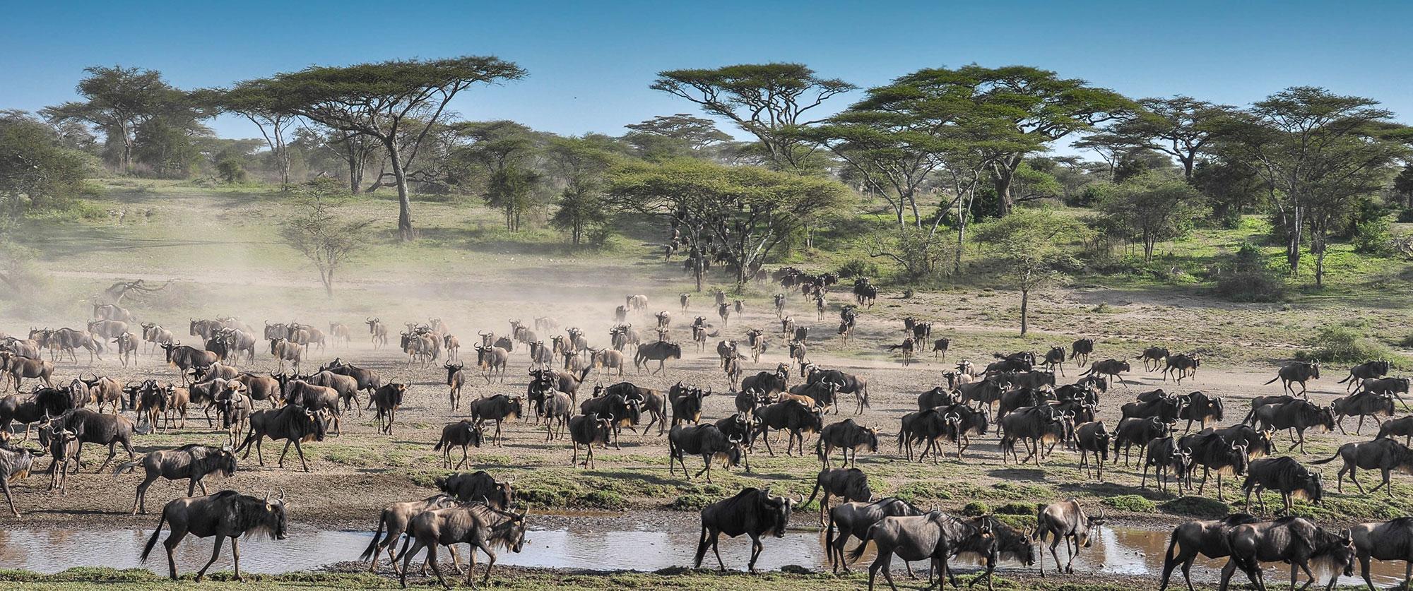 Budget Serengeti Safari
