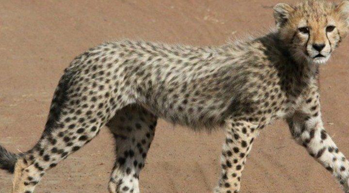 10 Days Tanzania Safari And Zanzibar