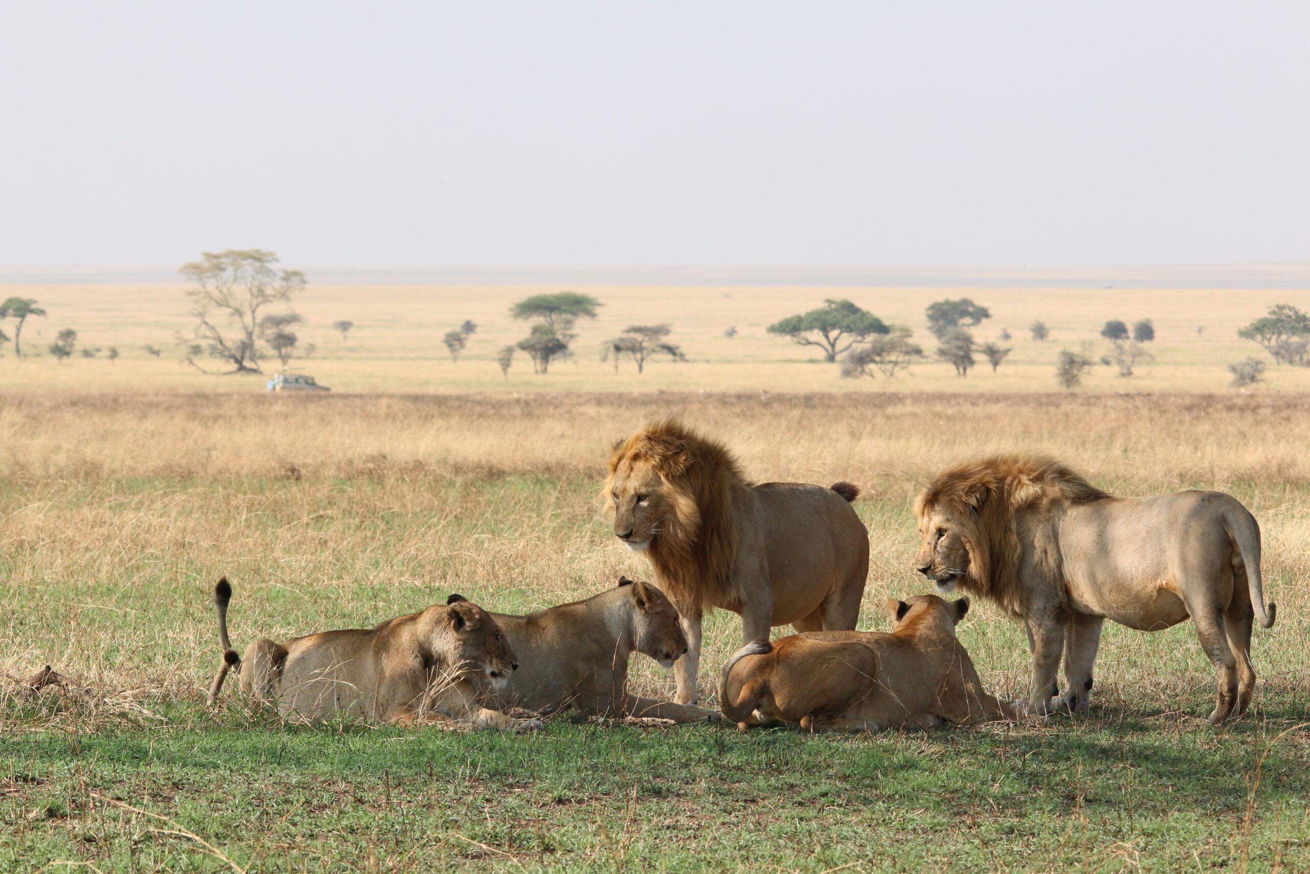 Group Joining Safari